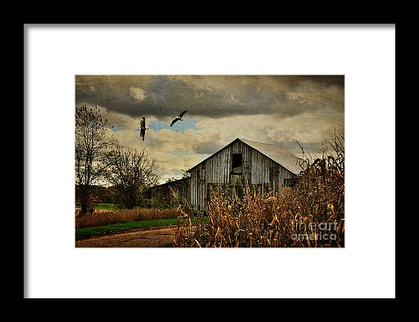 Barn Framed Print featuring the photograph On The Wings Of Change by Lois Bryan