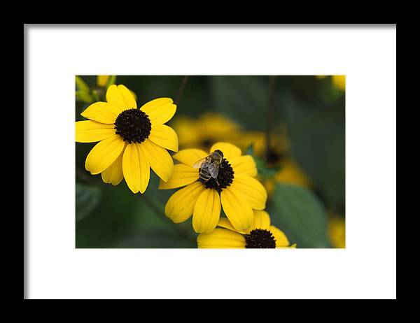 Yellow Framed Print featuring the photograph One bee over the flower's nest by Adrian Bud