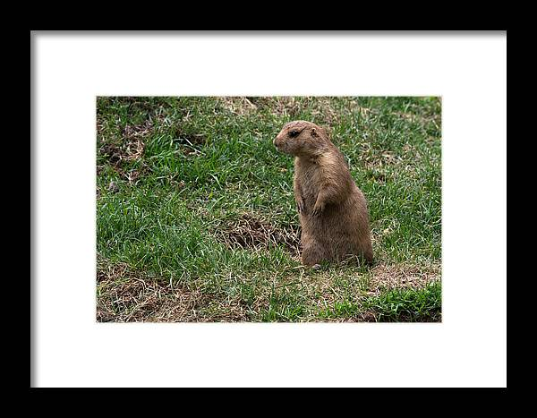 Wildlife Framed Print featuring the photograph One Foot Forward by Linda Kerkau