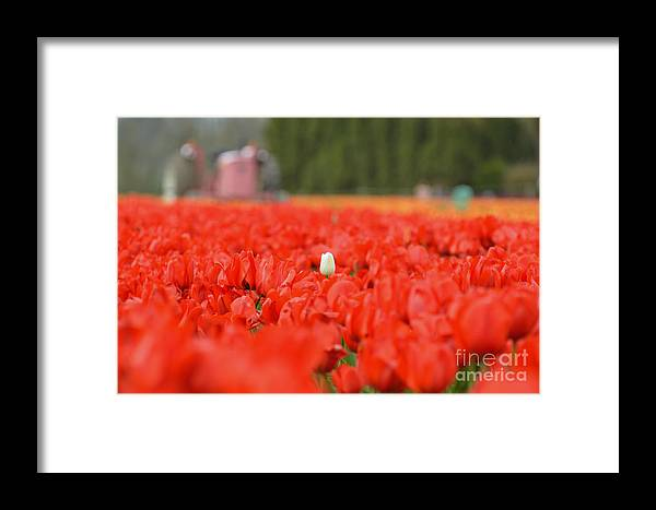 Tulips Framed Print featuring the photograph One In A Million by Out West Originals