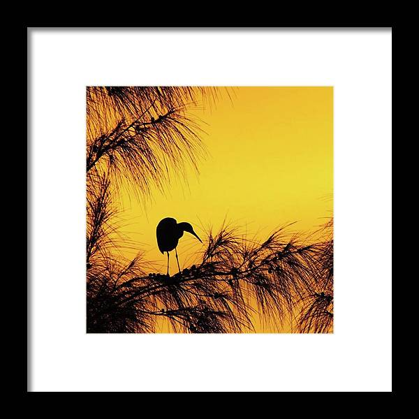 Egret Framed Print featuring the photograph One Of A Series Taken At Mahoe Bay by John Edwards