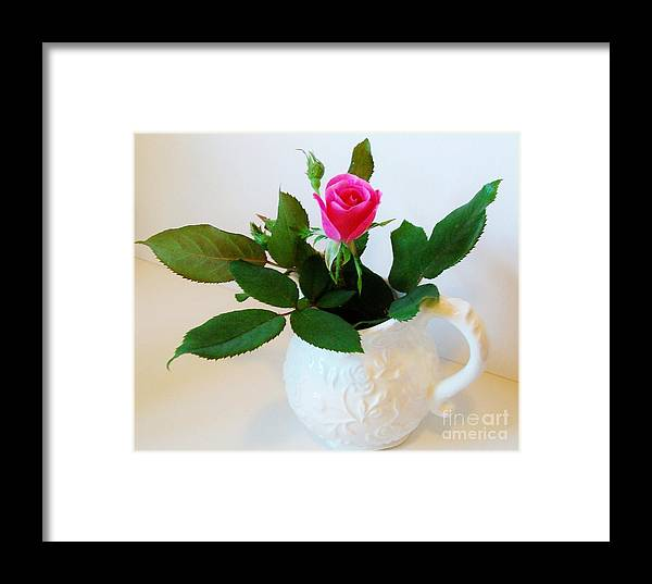 Photo Framed Print featuring the photograph One Sweet Rose by Marsha Heiken