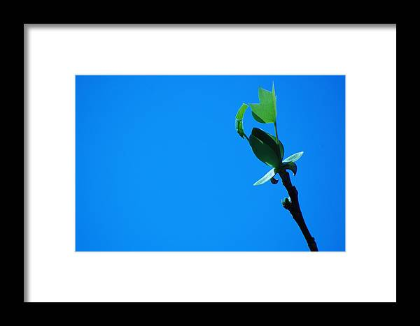 Maple Framed Print featuring the photograph Only Just Begun by Joyce Huhra