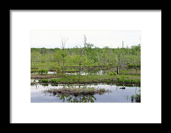 Betsy Lamere Framed Print featuring the photograph Onondaga Pool by Betsy LaMere