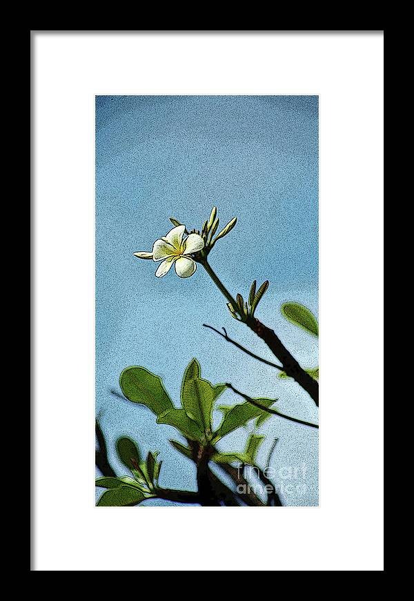 Plumeria Framed Print featuring the photograph Open To The Sun by Craig Wood