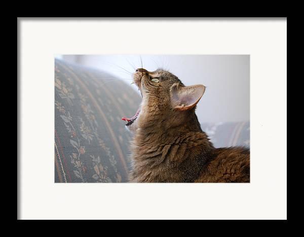 Cat Framed Print featuring the photograph Open Wide by Jennifer Englehardt