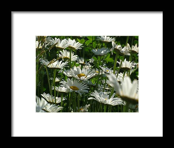 Flower Framed Print featuring the photograph Opening To The Sun by John Loyd Rushing