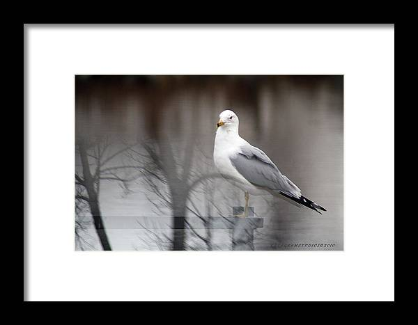 Optical Framed Print featuring the photograph Optical Illusion by KatagramStudios Photography
