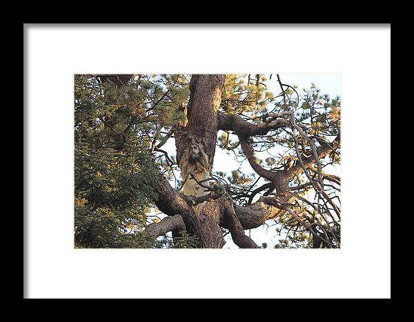Tree With The Face Of Jesus Optical Illusion Framed Print Featuring Photograph