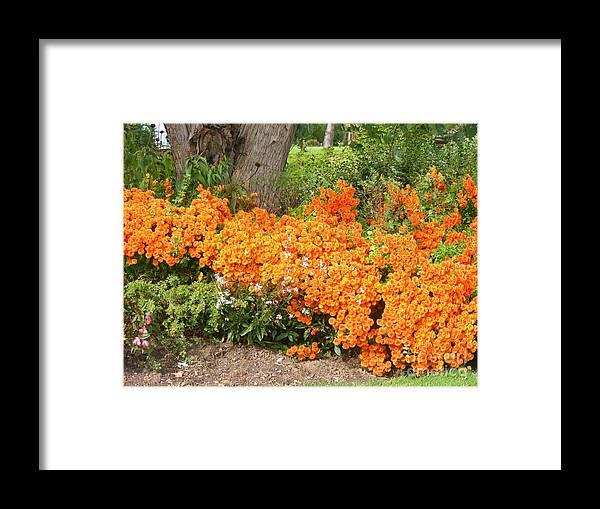 Flowers Framed Print featuring the photograph Orange Beauty by Deborah Selib-Haig DMacq