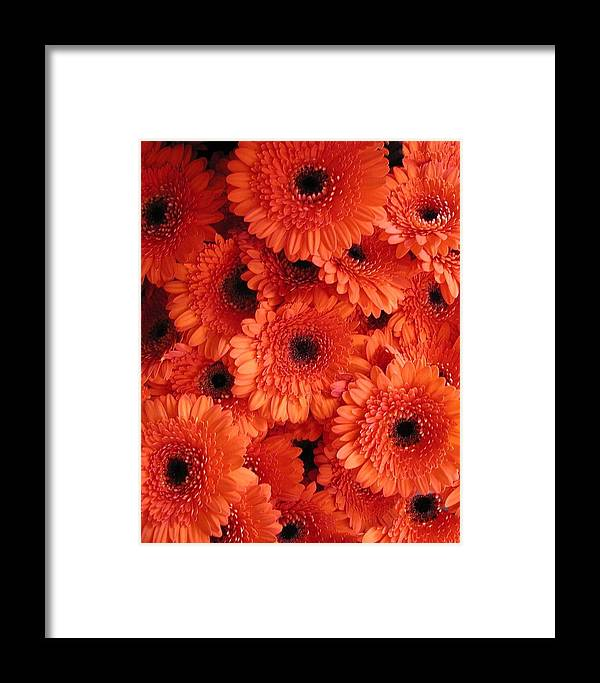 Flowers Framed Print featuring the photograph Orange Daisies by Tom Reynen