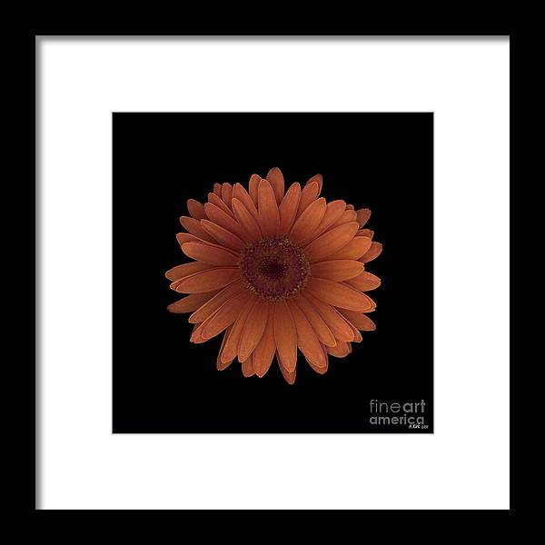 Orange Framed Print featuring the photograph Orange Daisy Front by Heather Kirk