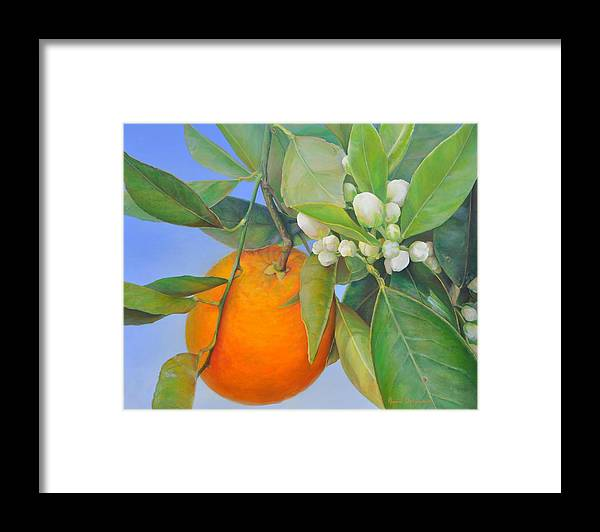 Floral Painting Framed Print featuring the painting Orange en Bouton by Muriel Dolemieux
