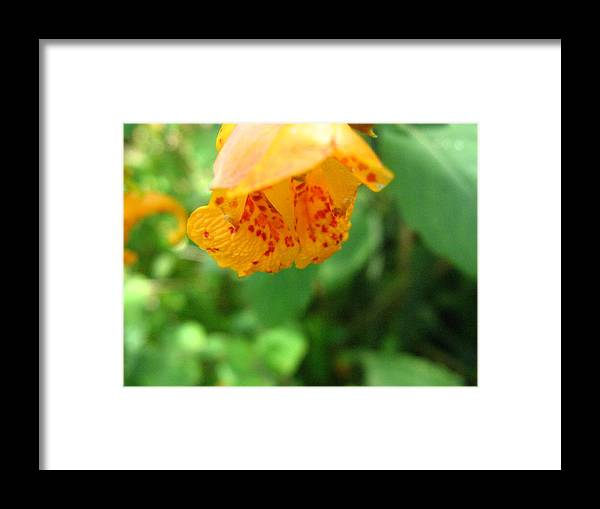 Flower Framed Print featuring the photograph Orange Flower by Melissa Parks
