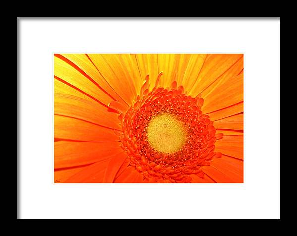Flower Framed Print featuring the photograph Orange Flower by Ruben Flanagan