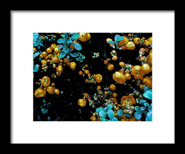 Orange Framed Print featuring the photograph Orange Flowers by Colin Drysdale