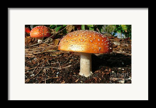 Mushroom Framed Print featuring the photograph Orange Hat by Larry Keahey