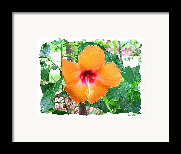 Landscrape Framed Print featuring the photograph Orange Hibiscus by Judy Waller
