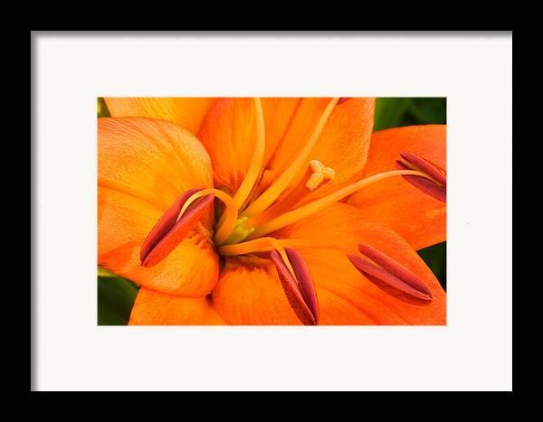 Orange Framed Print featuring the photograph Orange II by Amanda Kiplinger