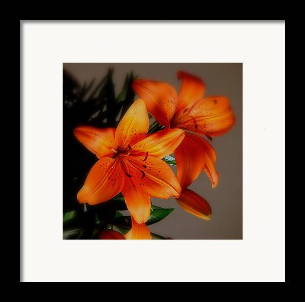 Orange Framed Print featuring the photograph Orange Lilies by Judy Waller