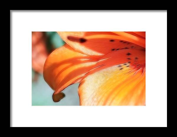 Flowers Framed Print featuring the photograph Orange Petal Dreams by Lesley Smitheringale