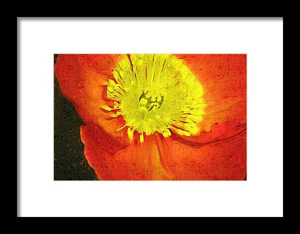 Poppy Framed Print featuring the photograph Orange Poppy by Donna Bentley