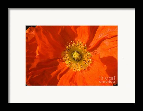 Nature Framed Print featuring the photograph Orange Poppy Flower by Julia Hiebaum