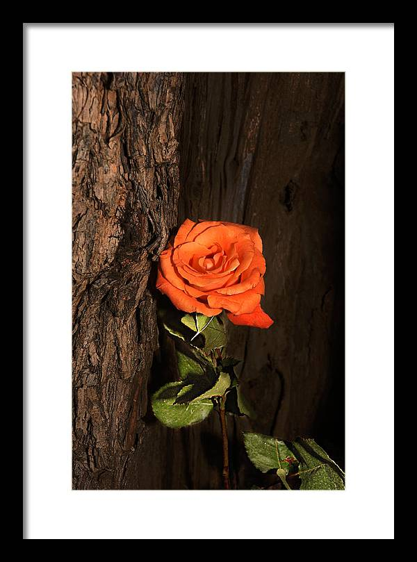 Rose Framed Print featuring the photograph Orange Sherbet And Hot Chocolate by Richard Gordon