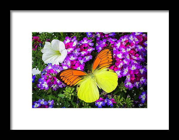 Flower Framed Print featuring the photograph Orange Yellow Wings by Garry Gay