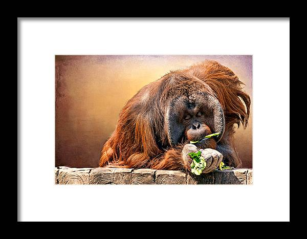 Animal Framed Print featuring the photograph Orangutan by Maria Coulson