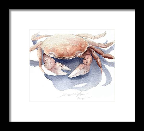 Watercolor Framed Print featuring the painting Orcas Crab by Cory Calantropio