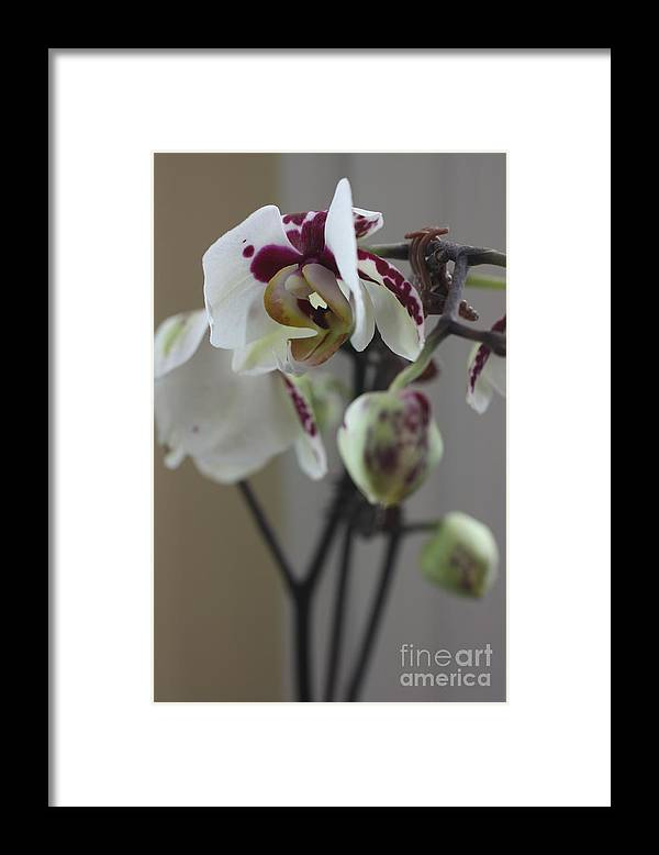 Orchid Framed Print featuring the photograph Orchid - 100 by David Bearden