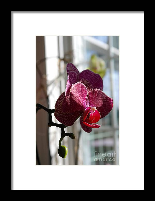 Orchid Framed Print featuring the photograph Orchid - 102 by David Bearden