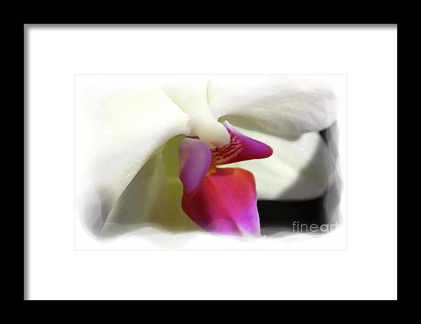 Orchid Framed Print featuring the photograph Orchid 1 by David Bearden