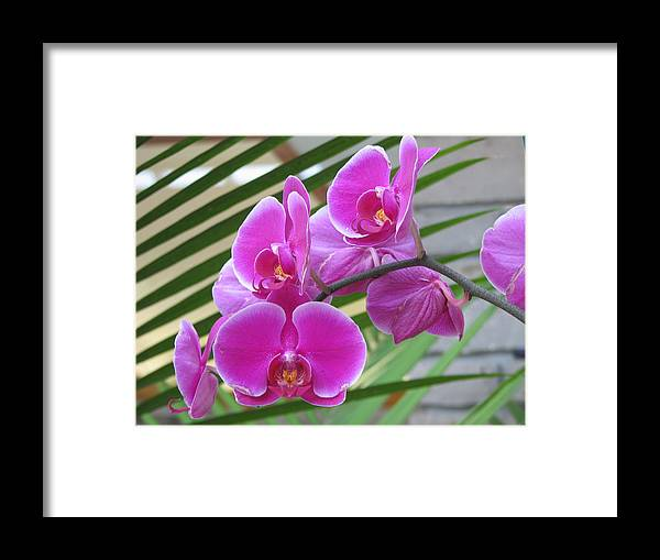 Orchid Framed Print featuring the photograph Orchid 1 by David Dunham