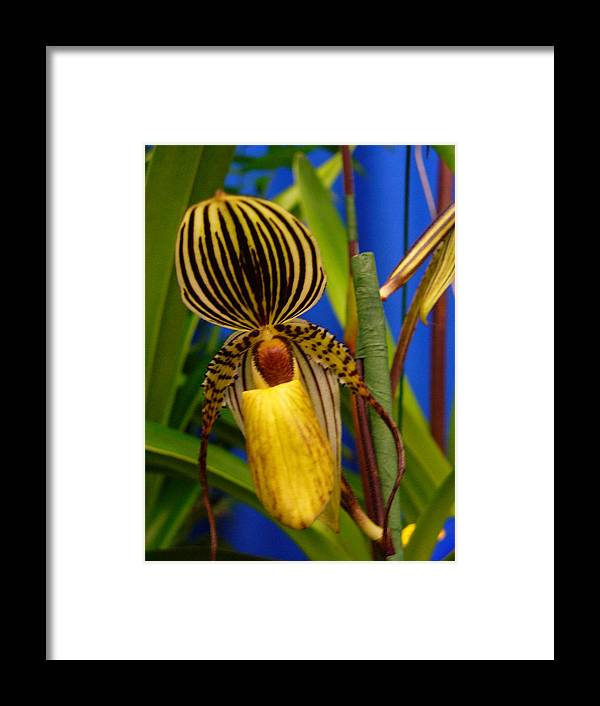 Orchids Framed Print featuring the photograph Orchid 10 by Peggy King