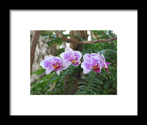 Orchid Framed Print featuring the photograph Orchid 3 by David Dunham