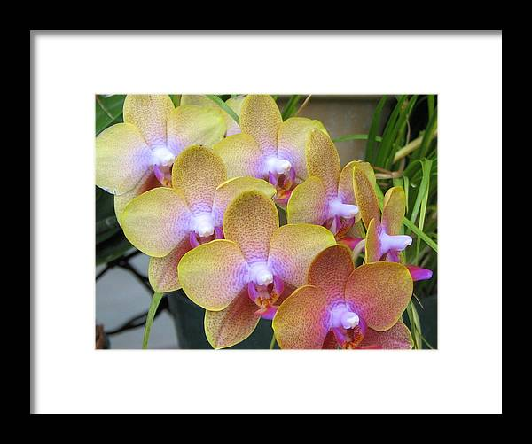 Orchid Framed Print featuring the photograph Orchid 7 by David Dunham