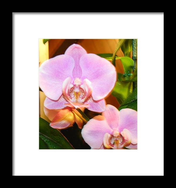 Flower Framed Print featuring the photograph Orchid Bloom by Gloria Byler