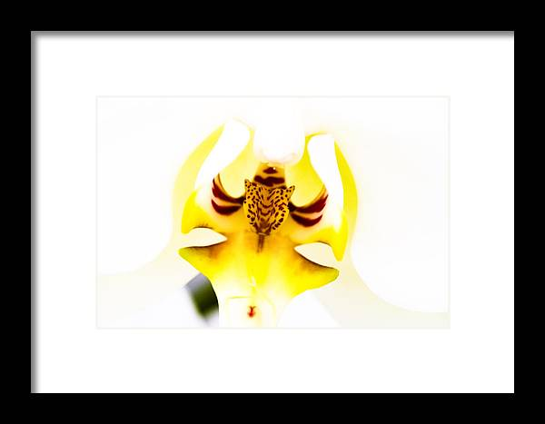 Flower Framed Print featuring the photograph Orchid by Ches Black
