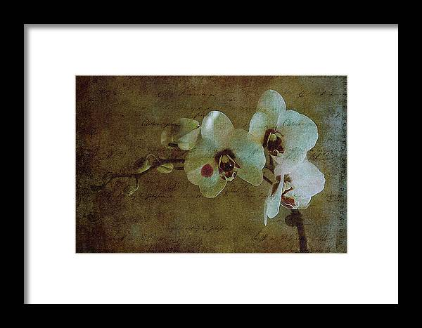 Orchid Framed Print featuring the photograph Orchid by Inesa Kayuta