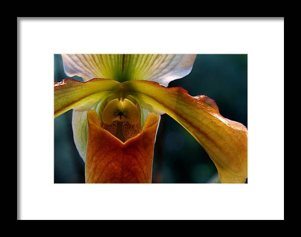 Slipper Orchid Framed Print featuring the photograph Orchid Slipper by Joanne Smoley
