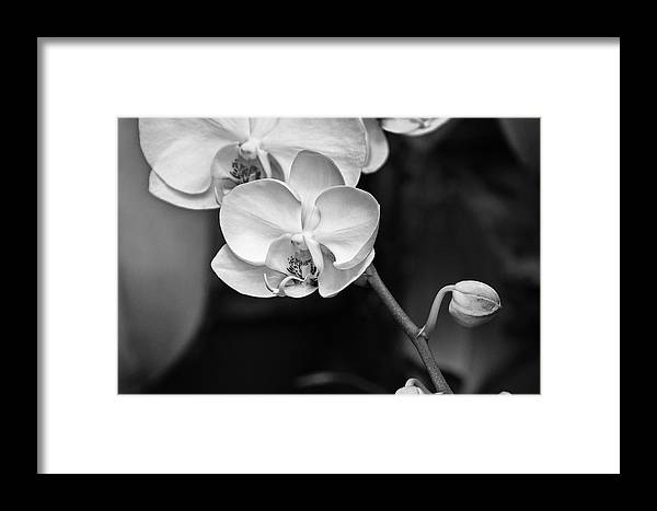 Orchid Framed Print featuring the photograph Orchid by Wilma Birdwell