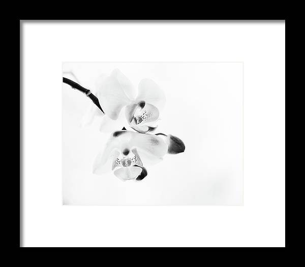 Orchid Framed Print featuring the photograph Orchid Zen Monotone by Susan Capuano
