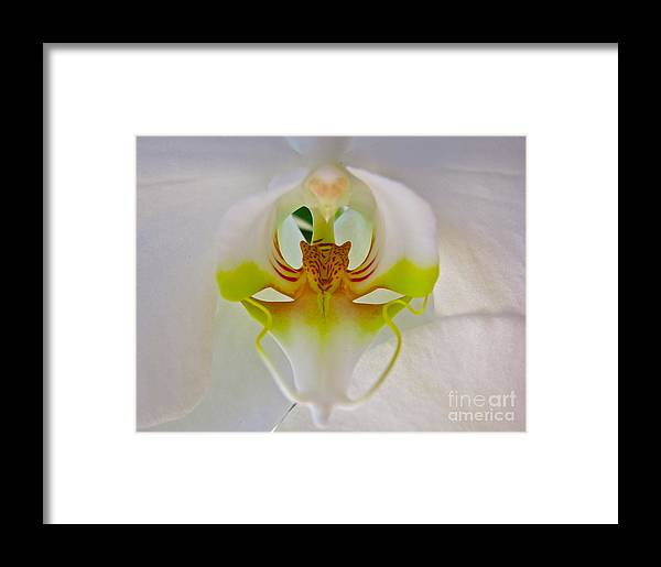 Flower Framed Print featuring the photograph Orchids Secret by PJ Cloud