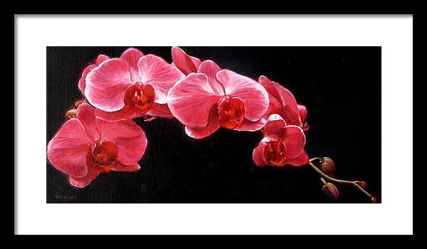 Floral Framed Print featuring the painting Orchids by Takayuki Harada