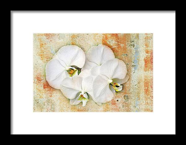 Orchids Framed Print featuring the photograph Orchids Upon The Rough by Andee Design