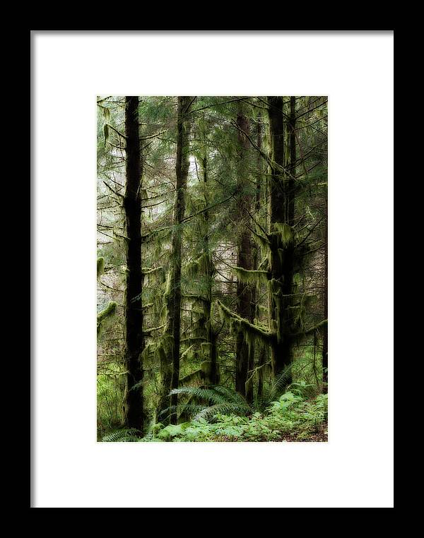 Oregon Framed Print featuring the photograph Oregon Old Growth Coastal Forest by Renee Hong