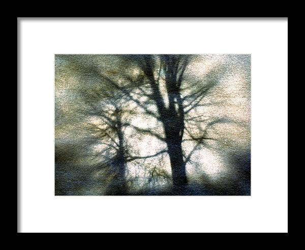Trres Framed Print featuring the photograph Original Tree by Diana Ludwig