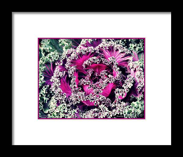 Cabbage Framed Print featuring the photograph Ornamental Kale by Sarah Loft